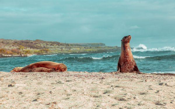 Familia de leones marinos